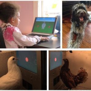 little girl at PC Behavior analysis lab CSI