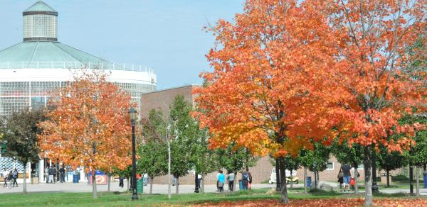 Fall at CSI
