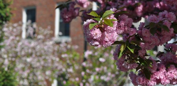 Spring flowers on Campus